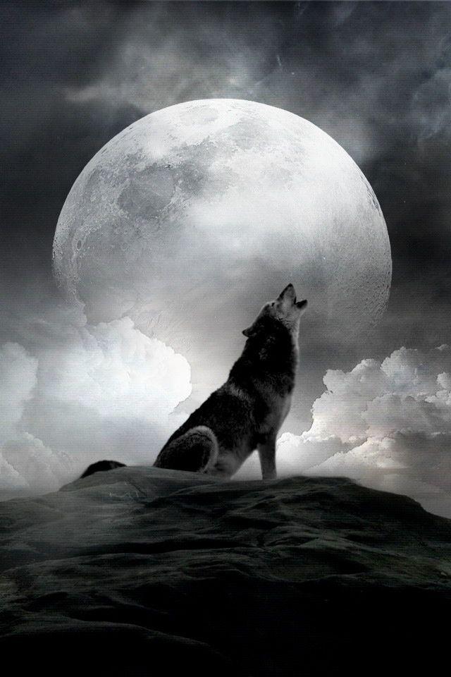 Ooowwwwwoooo Peinture De Loup Loup Qui Hurle Images Loup