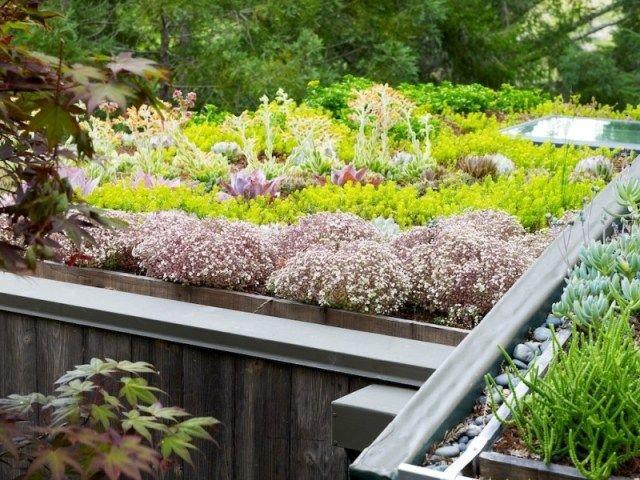 cr er une toiture v g talis e avec du sedum mode d emploi toiture v g talis e toit vegetal