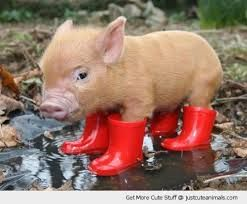 Image result for cute pigs and piglets
