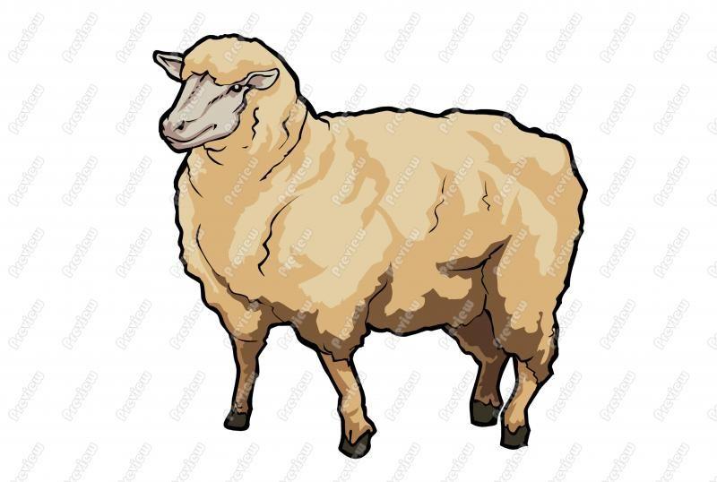 Cartoon Sheep Clip Art Related Keywords & Suggestions - Cartoon ...