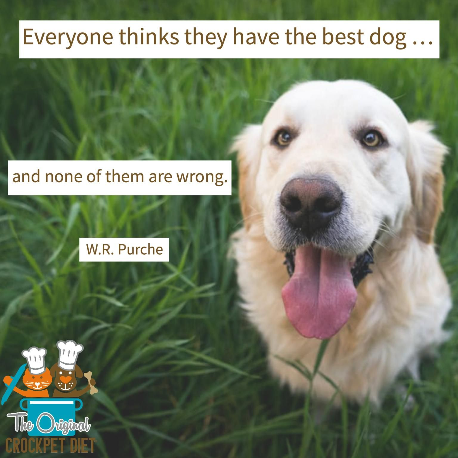 Pin On Pet Quotes