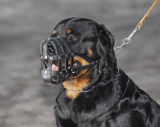 Super Ventilated Rottweiler Dog Muzzle 29 90 Www All About