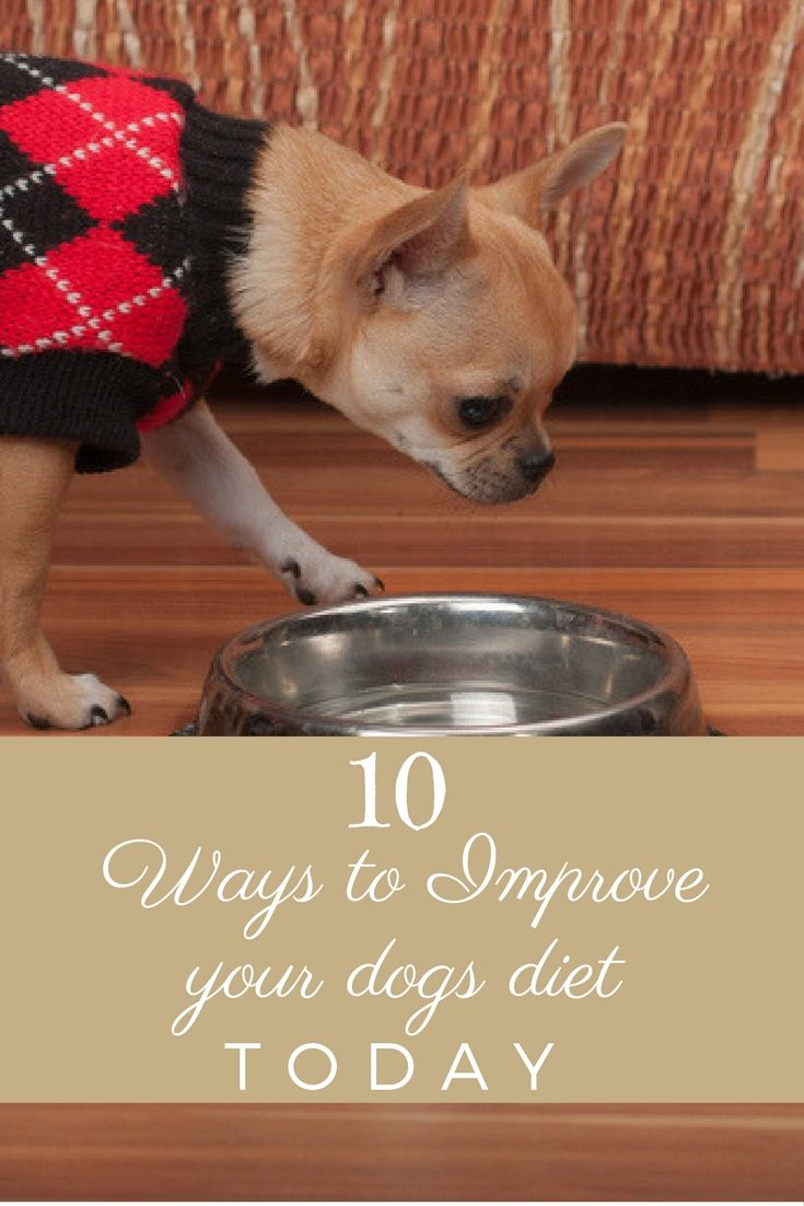 10 Simple and Easy ways to improve your dog's diet and thus their health right now
