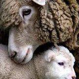 Wooley mom & kid
