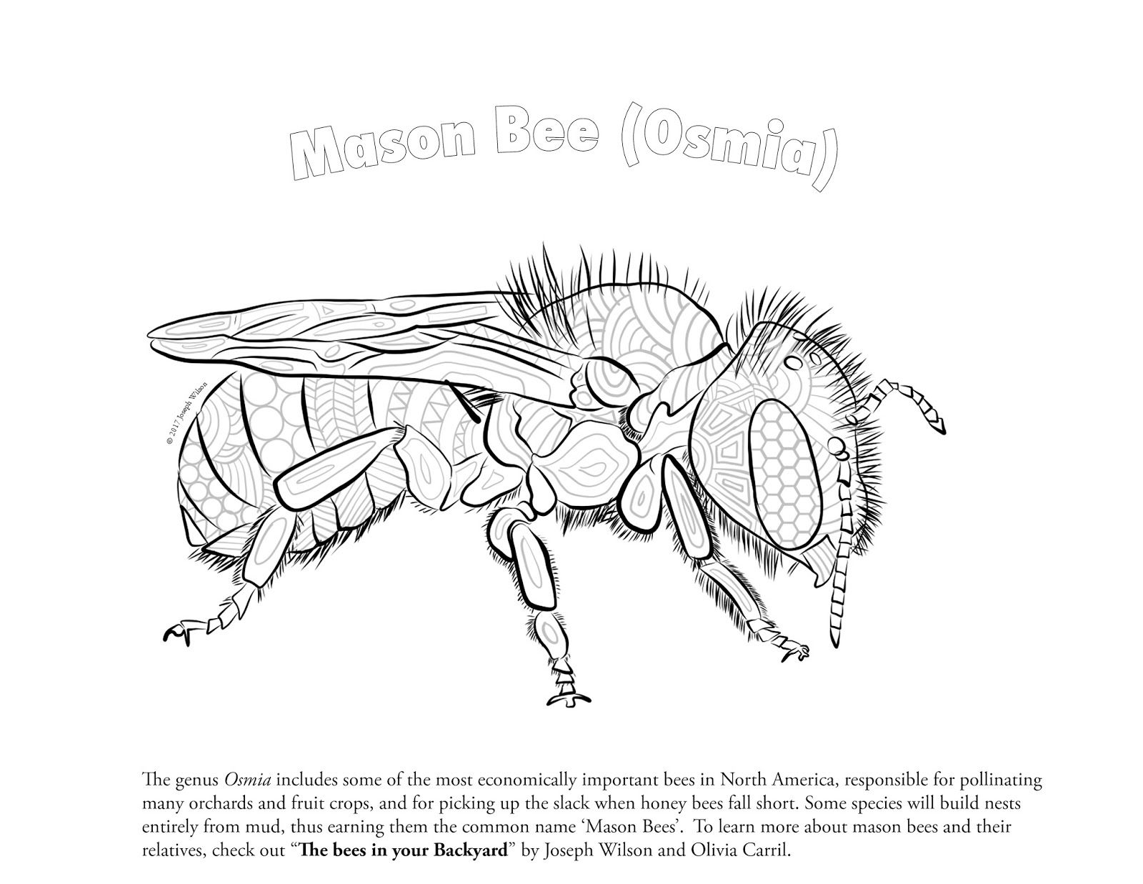 Bees in your backyard: Native Bee coloring page | Zentangles ...