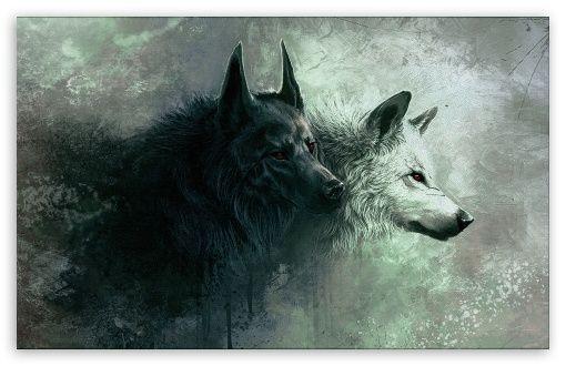 Artic Wolf Wallpaper 4k Ultra Hd Wallpaper Met Afbeeldingen