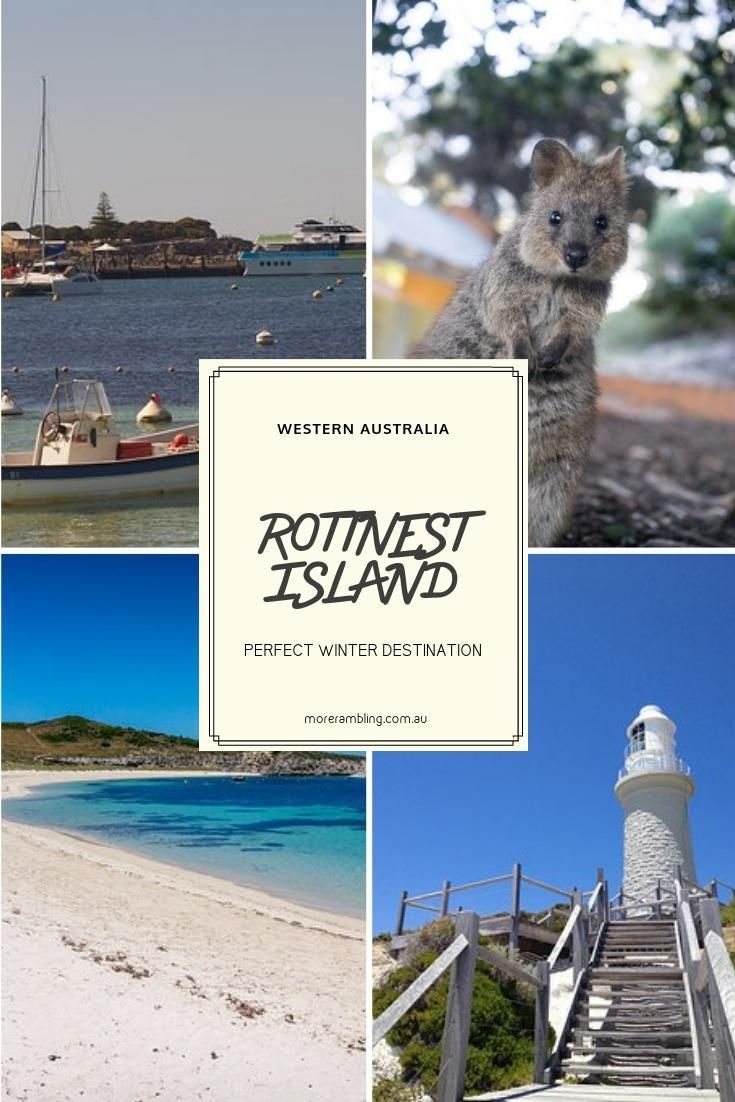 Rottness Island hosts what is undeniably the cutest and