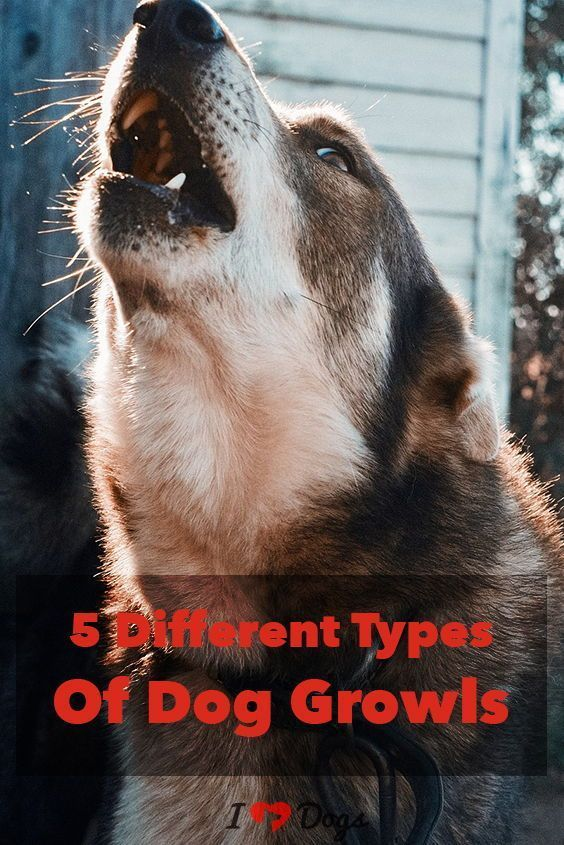 The 5 Different Types Of Dog Growls Dog growling, Dogs