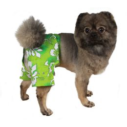 Cute Swimwear For Your Dog And Puppy Poshpuppy Dog Swimming