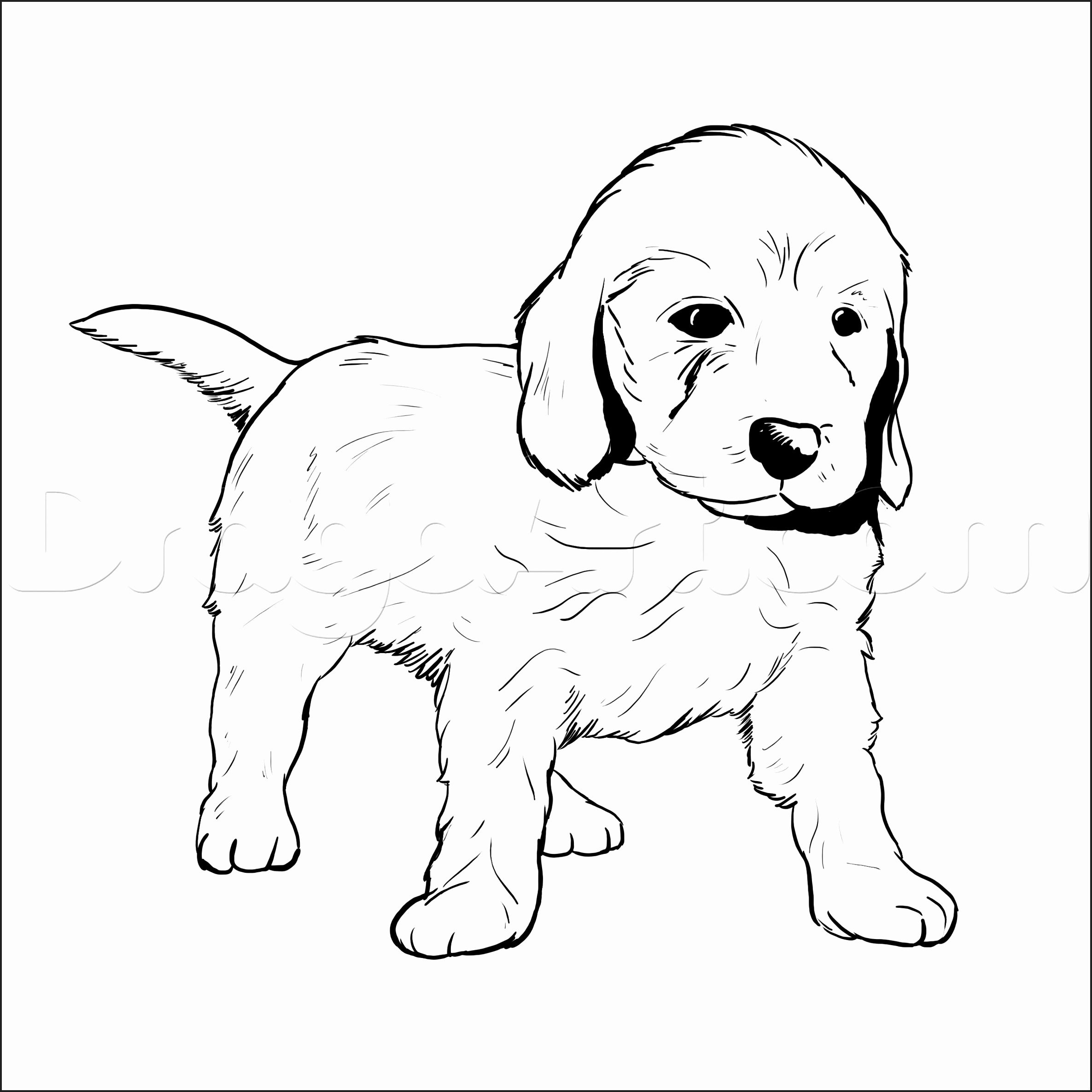 Puppy Coloring Pages Printable Pet Store Page Free Dog