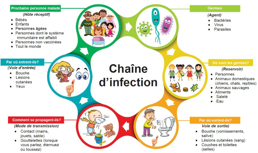 Chaîne d'infection Santé publique Ottawa in 2020