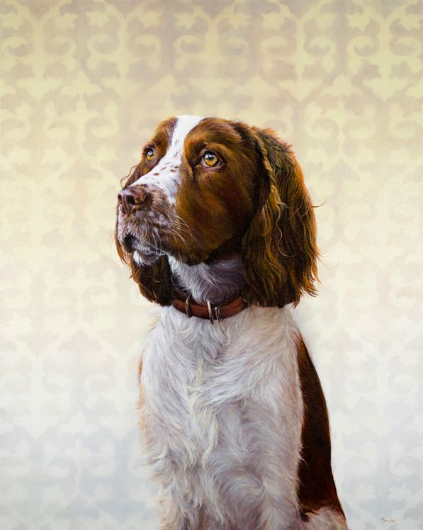 Georgia A Springer Spaniel From Fort Collins Co Somehow She Was Both Beautiful And Goofy At The Same Time Dog Portraits Puppy Art Pet Portraiture