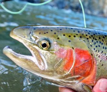 платная рыбалка форель