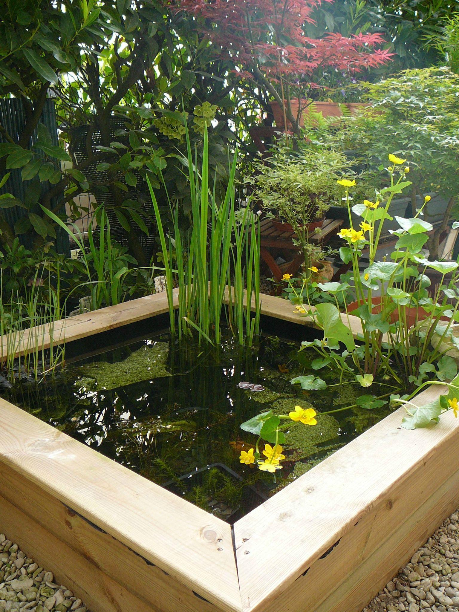 100 Incroyable Idées Petit Bassin Poisson Terrasse