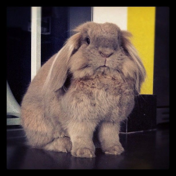 Meet @Pezzewol's friendly bunny, posted to Twitter on May 11, 2012.