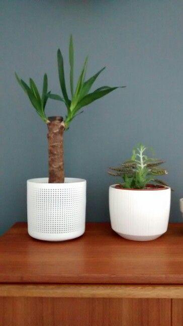 plantas con macetero blanco en aparador de madera de teca