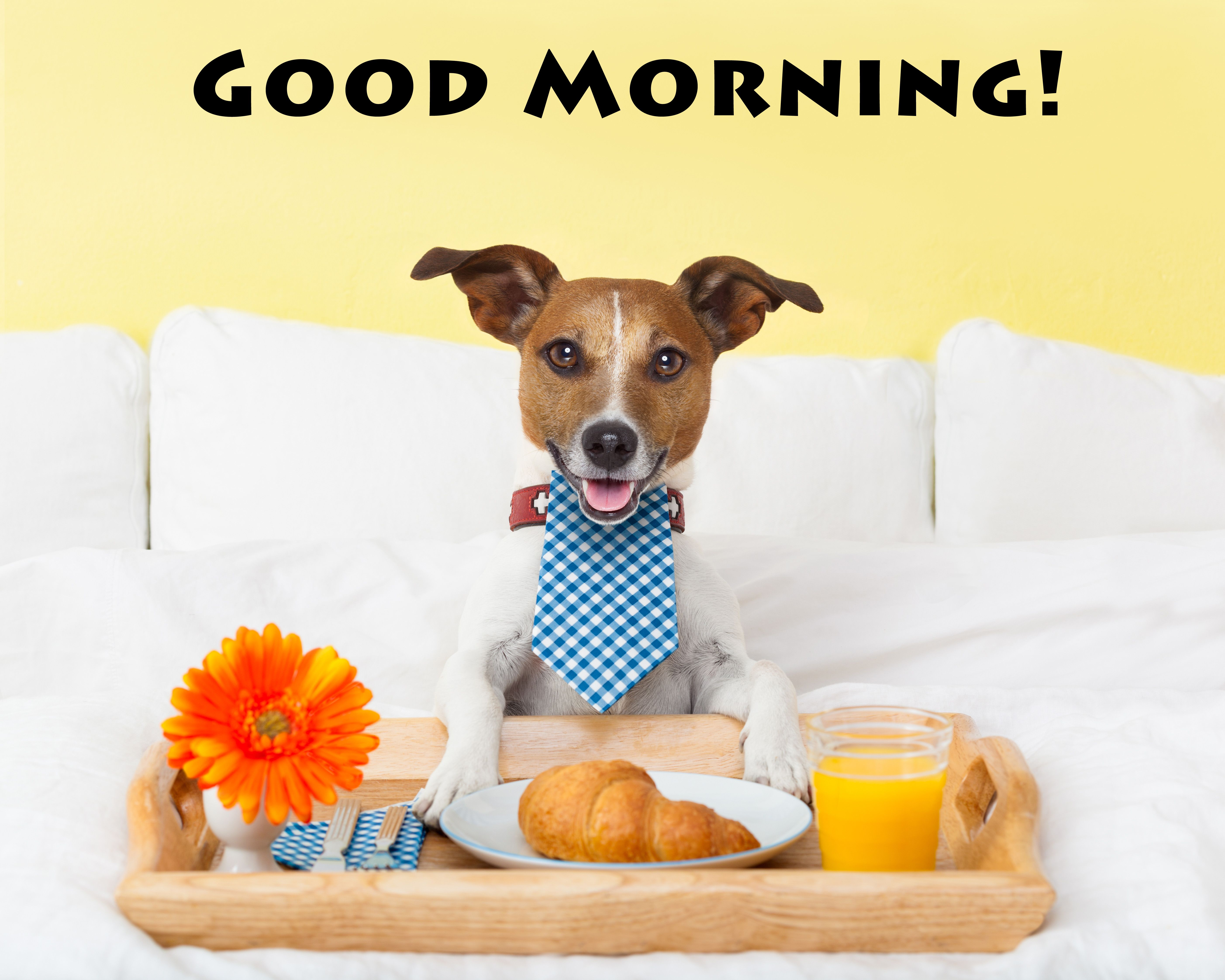 Good morning. Dog eating breakfast in bed. pinned by www