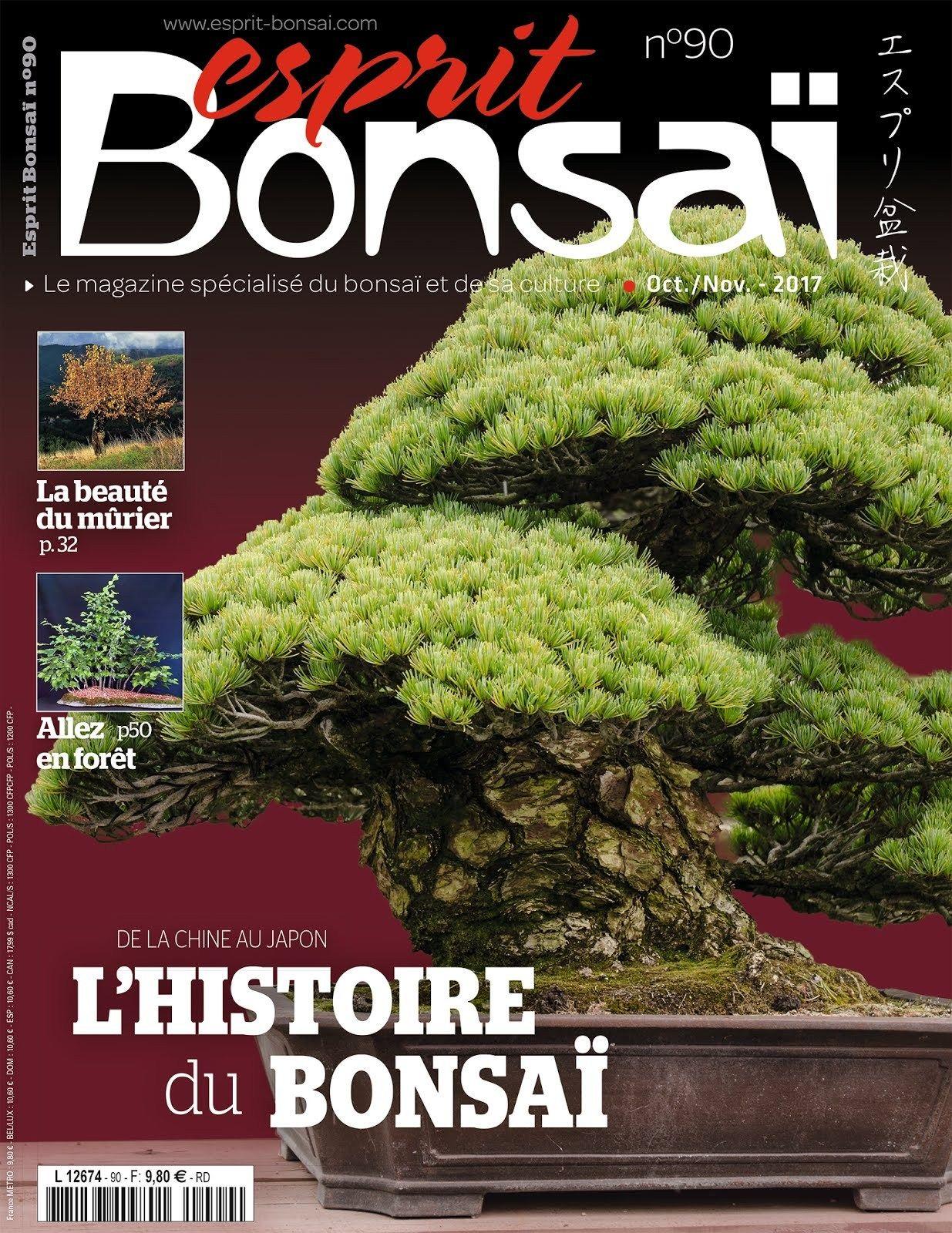 Satsuki Azalea Bonsai Care Pictures Bonsai Gallery Bonsai Care Bonsai Indoor Bonsai Tree