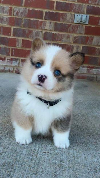 27 Puppies Who Are Too Cute To Be Real With Images Cute Husky Puppies Cute Animals Animals