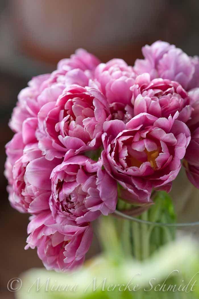 Ståtliga tulpaner | blomsterverkstad