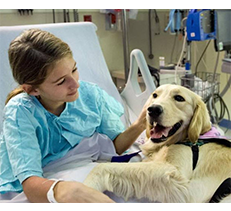 Service Dog and Emotional Support Animal Certification and