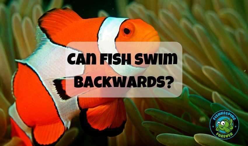 Can Fish Swim Backwards Fish Swimming Fish Saltwater Aquarium Fish