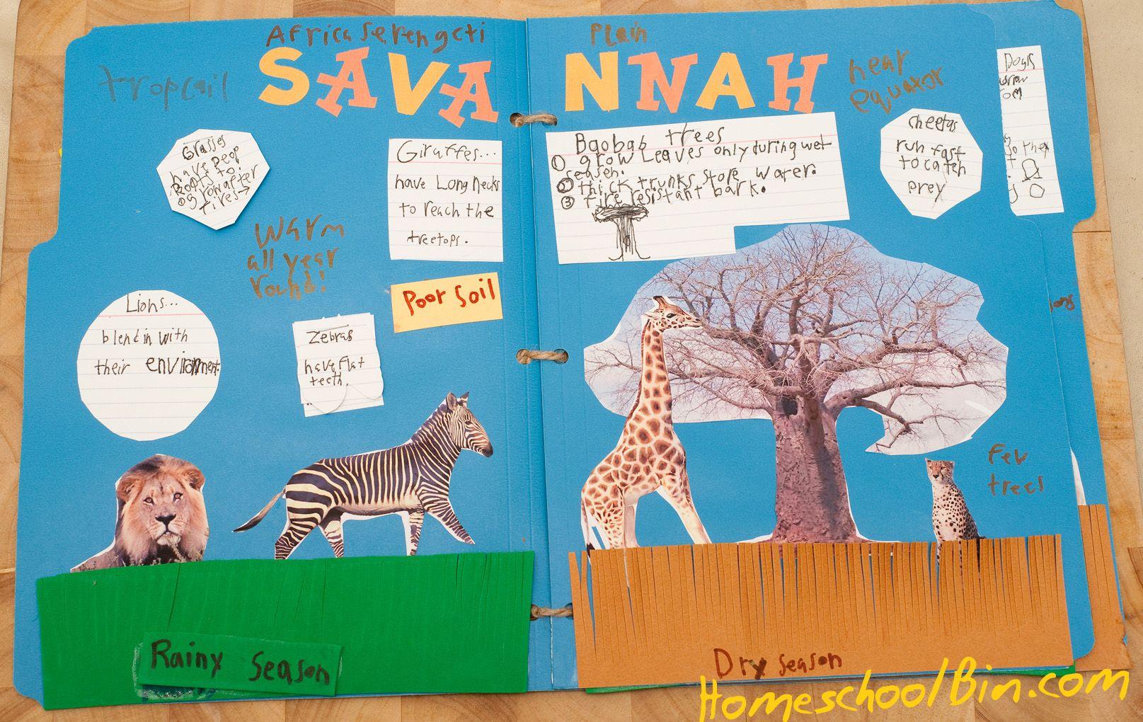 Savanna Lapbook Inside Homeschool science