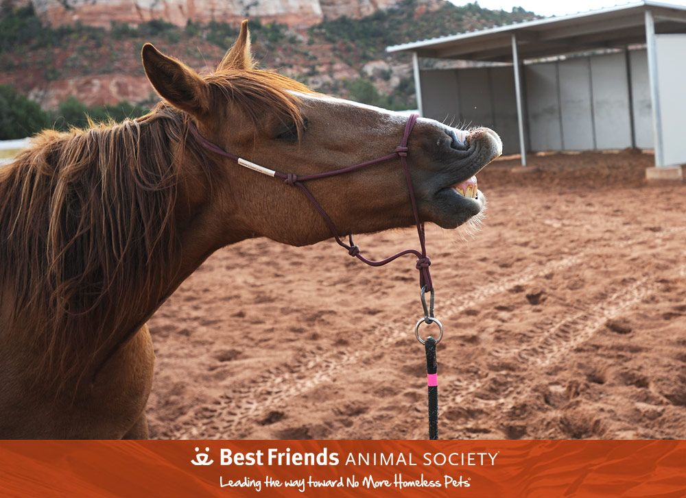 Adopt From Our Sanctuary Animal Society Horses Pets