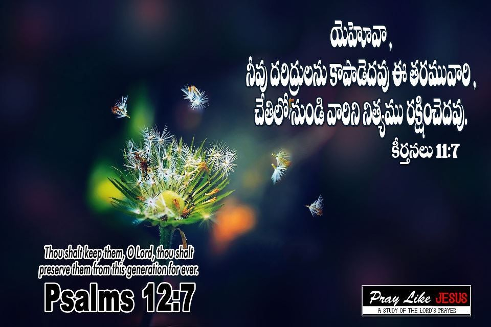 Bible Quotes Telugu Wallpapers Free Gospel Daily Dandelion Hd Flower Wallpaper Hd Flowers