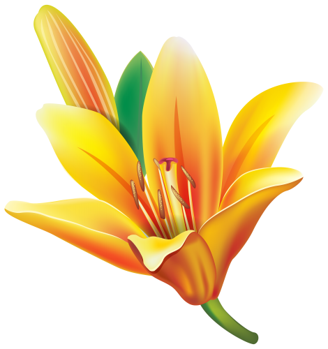 Yellow Lily Flower PNG Clipart Estampas, Gravuras