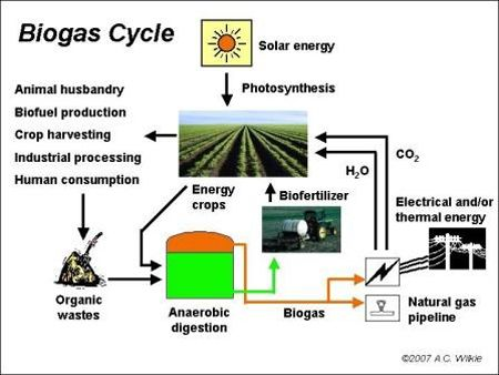 biogas from cow dung - Google Search | Biogas | Farming