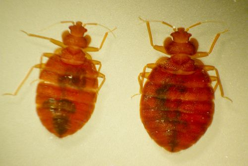 Bed Bug Danger 5 Ways To Stay Safe When You Travel Bed Bugs Bed Bugs Infestation Bed Bug Facts