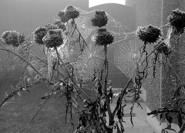 Beautiful dead flowers and cobwebs photo