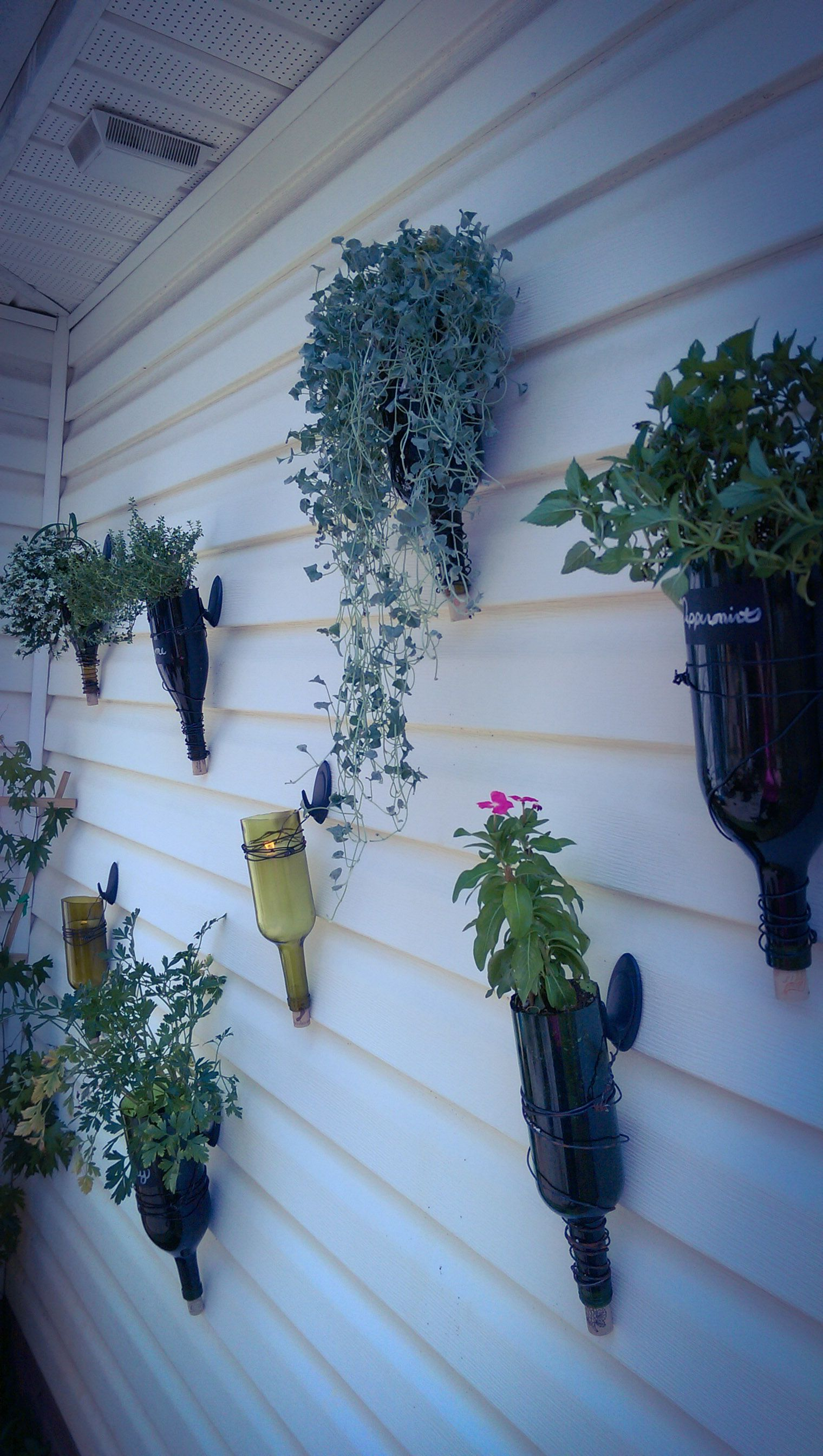 DIY hanging wine bottle planters. I used a mix of herbs ...