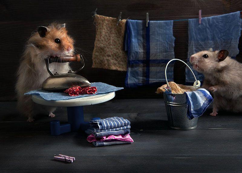 картинки из жизни мышек новый год