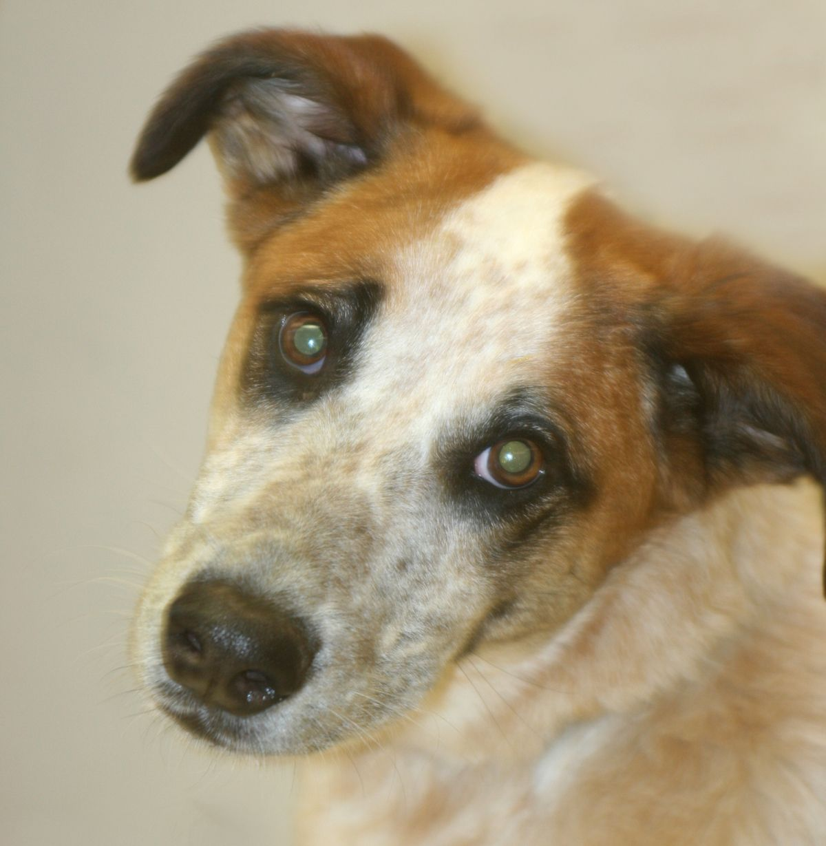Adopt Vaughn on Dogs, puppies, Dogs, Humane society
