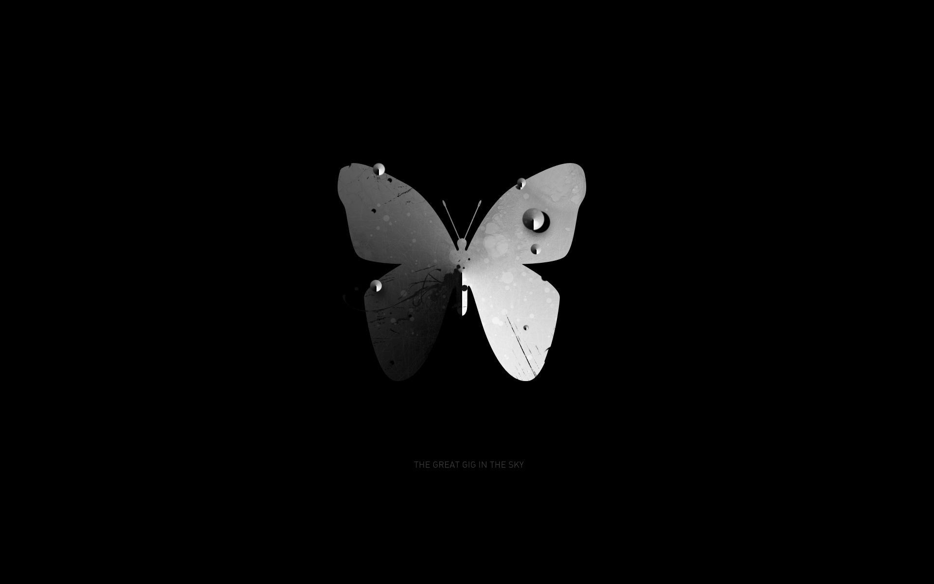Free Pictures Butterfly Butterfly Wallpaper Widescreen Wallpaper Free Pictures
