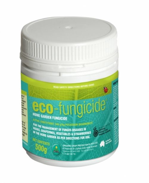 eco-fungicide is a certified organic fungicide for the control of common diseases including powdery mildew, black spot and rust.