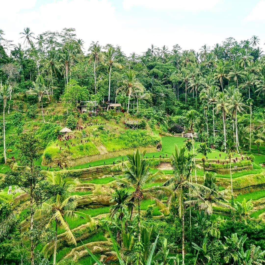 Wisata Alam Bali Tegalalang Ubud Ubud Bali Outdoor
