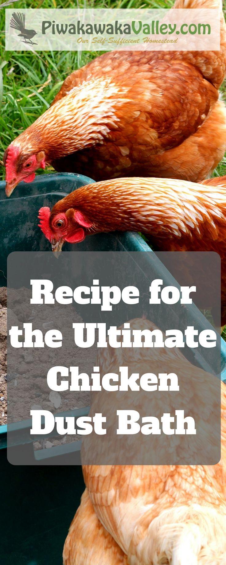the ultimate chicken and rabbit dust bath recipe backyard