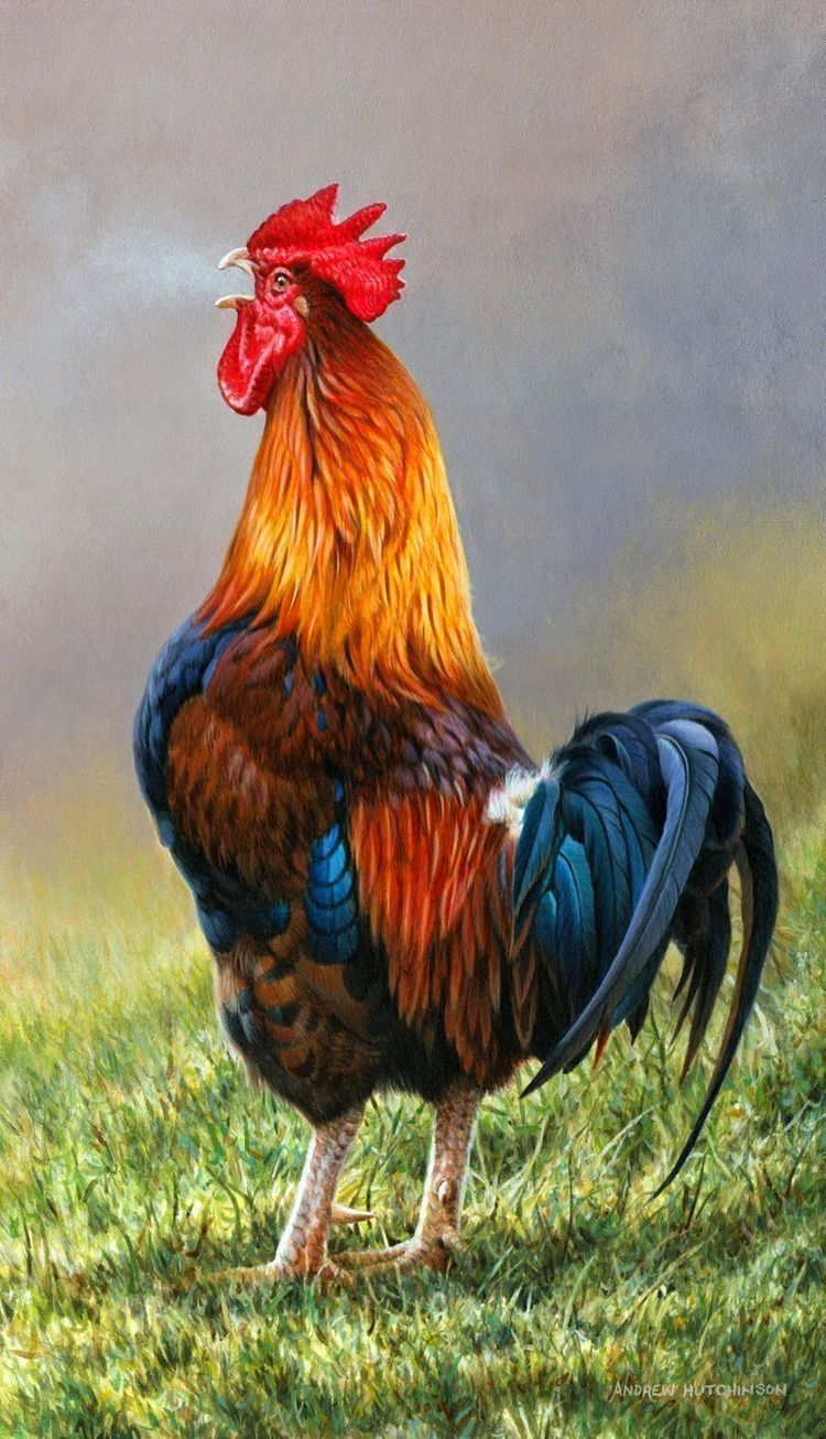 Pin by Vicky de Molina on Pinturas Rooster painting