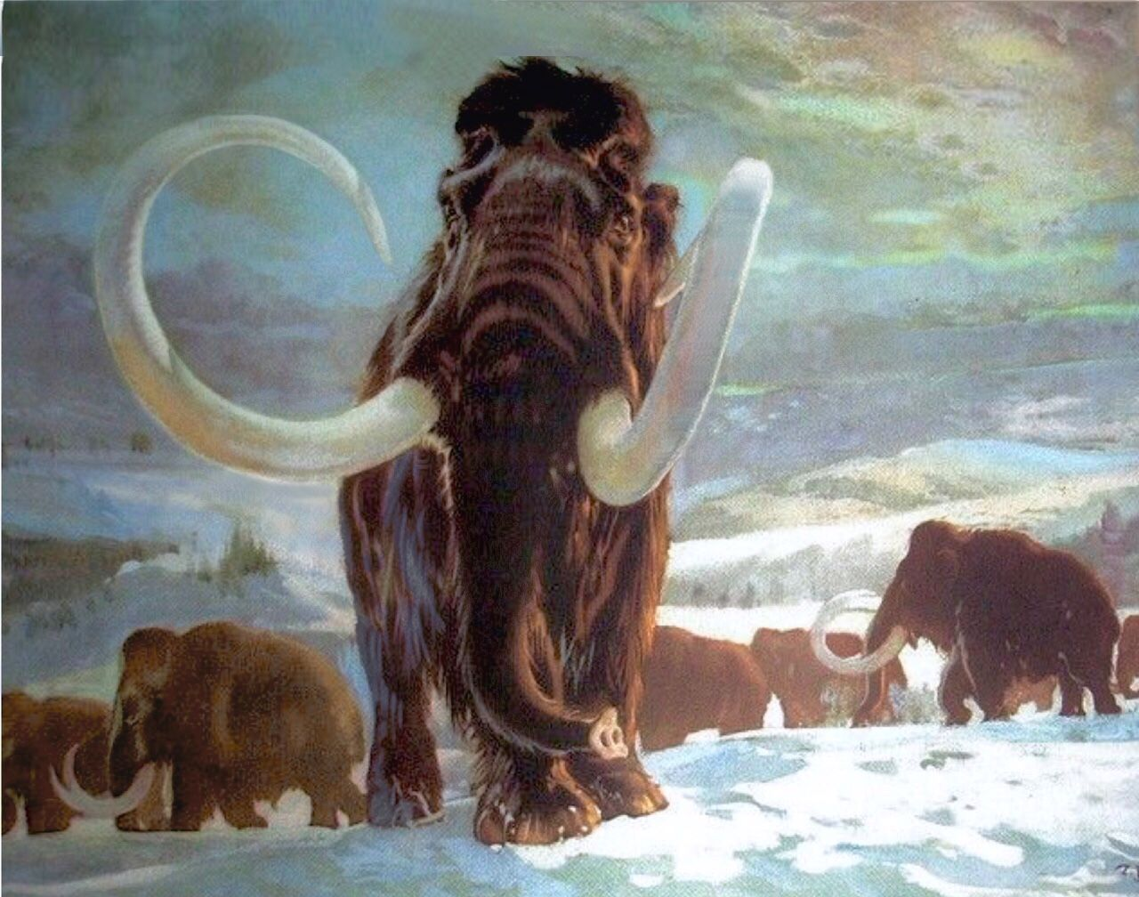 The Woolly Mammoth Mammuthus Primigenius Is An Elephant