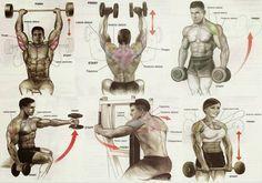 Shoulder Workout Chart