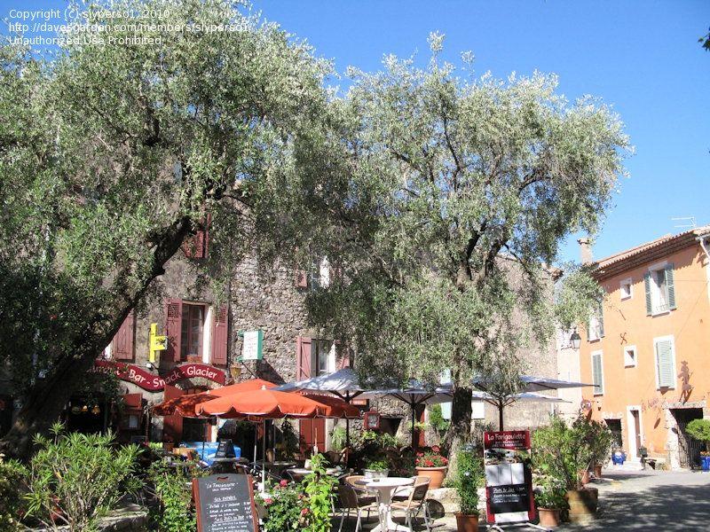 28 inspirational olive garden ann arbor - Olive Garden Ann Arbor