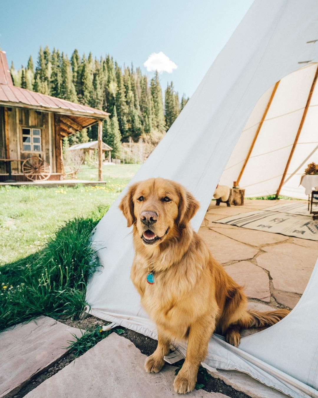 Aspen The Mountain Pup On Instagram I Think I Ve Found My New