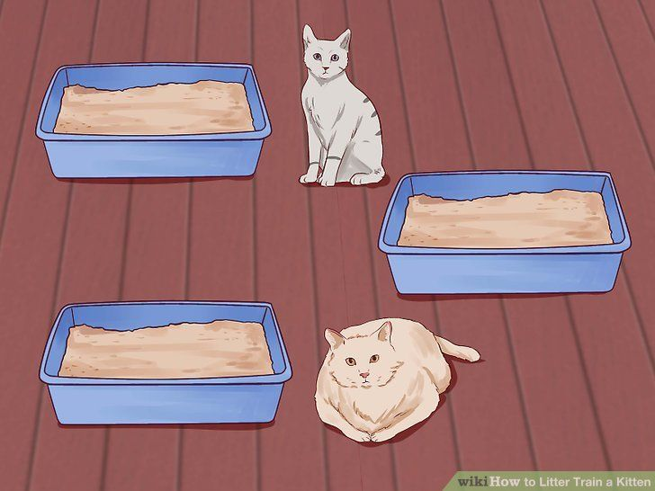 3 Ways To Litter Train A Kitten Wikihow Training A Kitten Litter Training Cat Training Litter Box