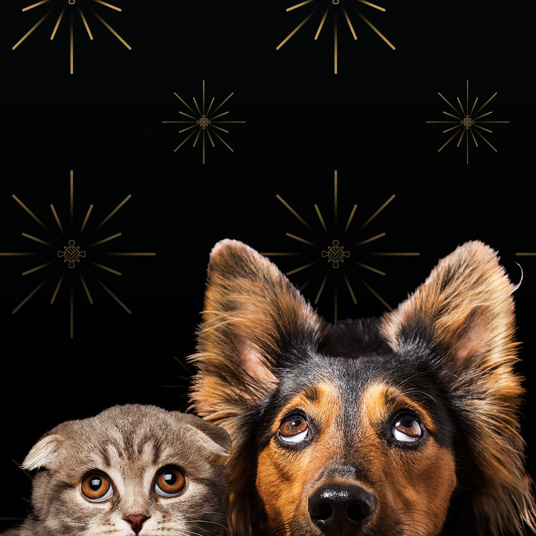 Survival Guide Pets And New Year S Eve Fireworks Pet Care Logo Pets Animals