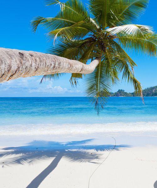 Seychelles Island Beaches: Beautiful Beaches, Tropical Island Beach