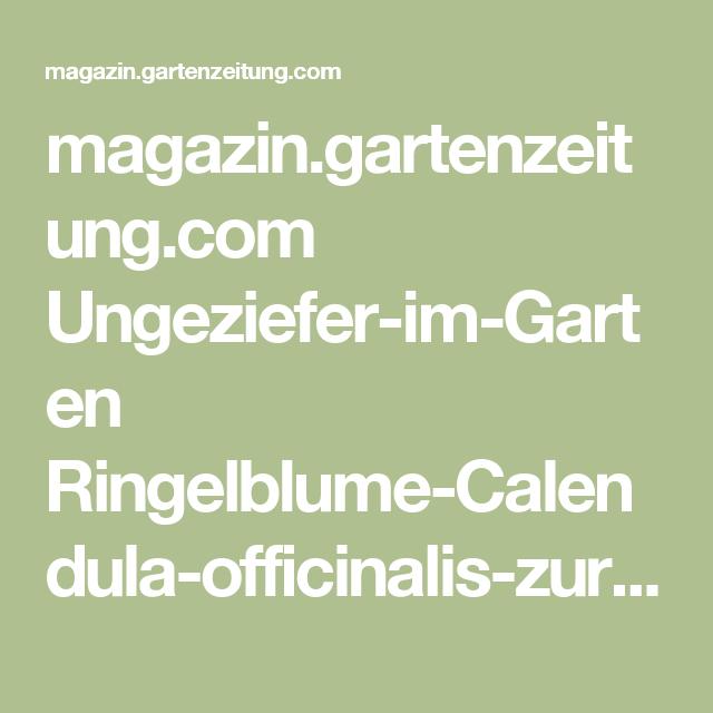 magazin.gartenzeitung.com Ungeziefer-im-Garten Ringelblume-Calendula-officinalis-zur-Schneckenabwehr.html