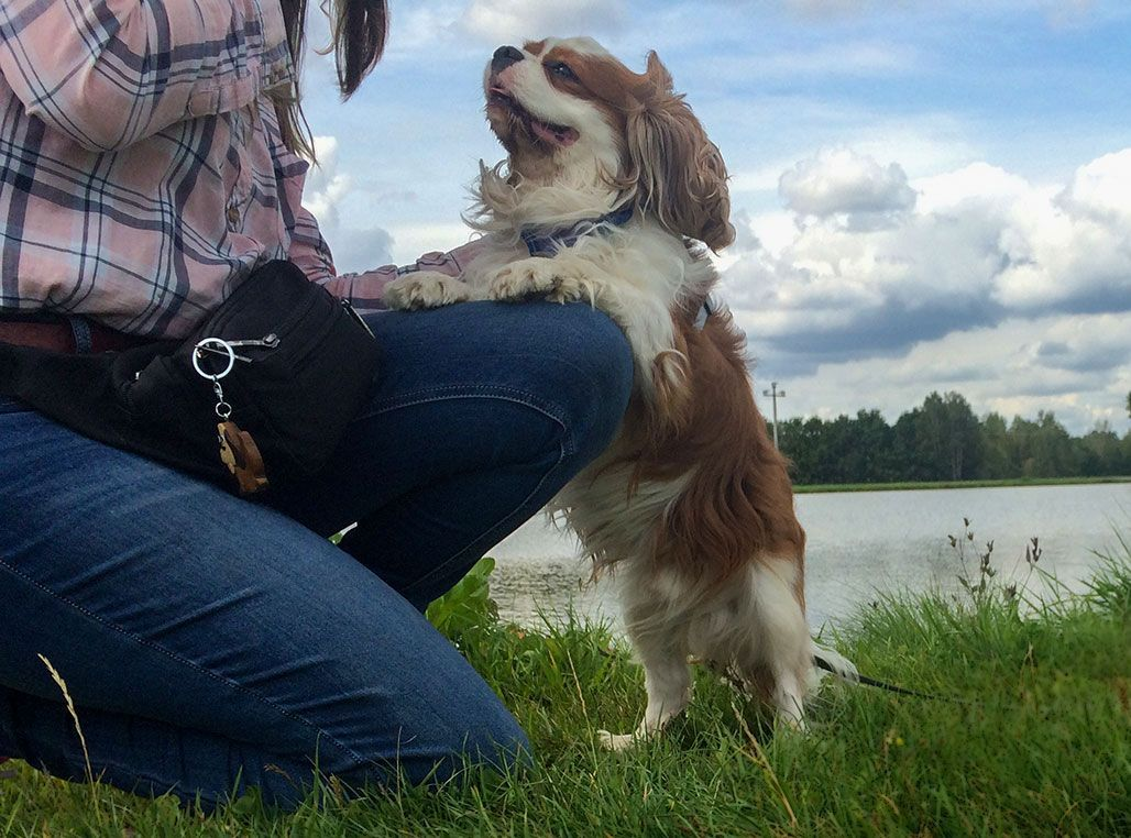 Dominic Vom Residenz Garten Fotos September 2019 Cavalier King